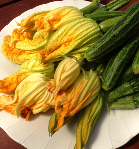 zucchini flowers picked