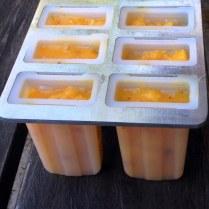 Mango Paleta Moulds