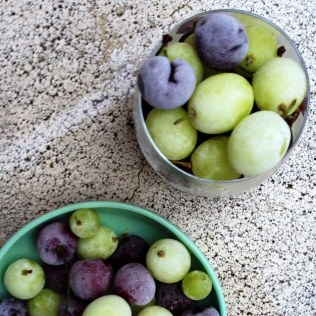 Frozen Grapes And Cherries